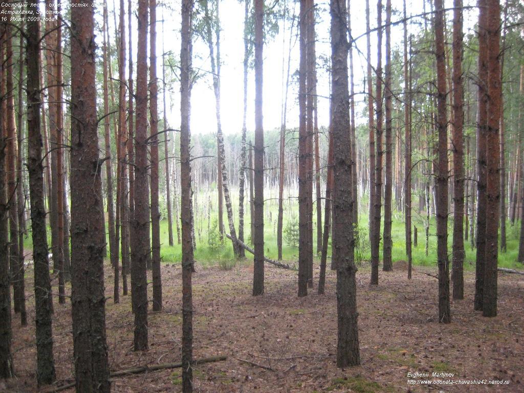 экосистемы степей россии реферат